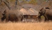 Ivory Lodge - Hwange National Park  Zimbabwe