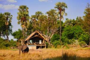 Belmond Eagle Island Lodge - Okavango Delta  Botswana