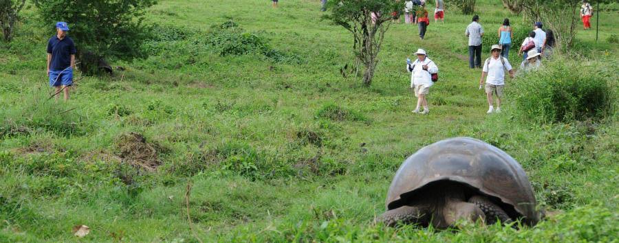 Ecuador: tra Terra, Cielo e Mare - Ecuador Galápagos Islands, Giant Tortoise © Ministerio de Turismo del Ecuador/ecuador.travel