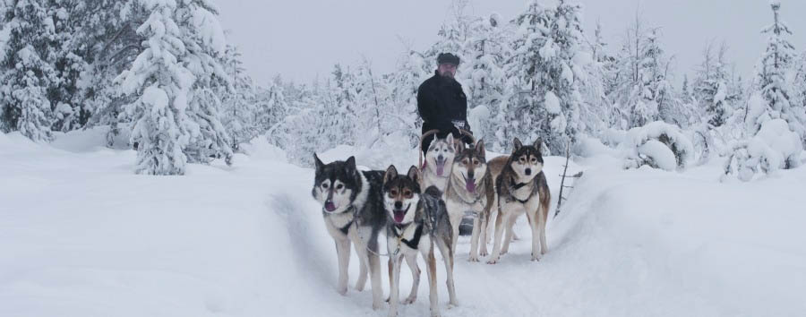 A caccia dell'aurora boreale - Finland Ylläs, Husky Sleigh Ride © Konsta Punkka/Visit Finland