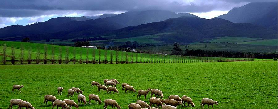 South Africa: The Classic Route 62 - South Africa  Robertson, countryside
