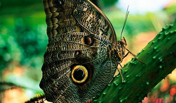 Beautiful Butterfly in The Pacuare Private Reserve - Costa Rica