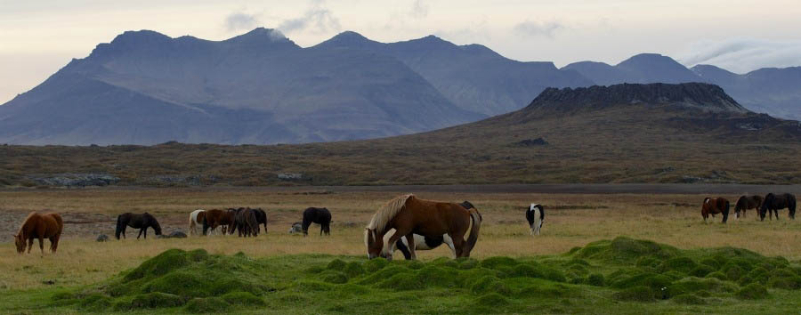 La vita segreta di Walter Mitty - Iceland Horses in The Snaefellsnes Peninsula - Courtesy of Iceland Travel