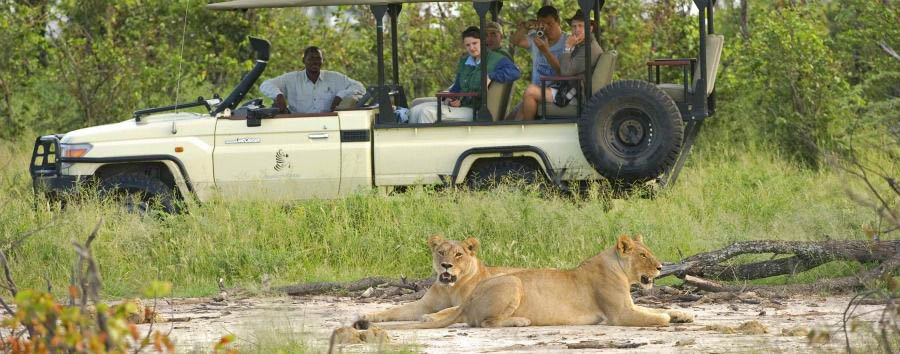 Highlights of Botswana - Botswana Sanctuary Stanley's Camp, Game Drive with Lions in The Okavango Delta