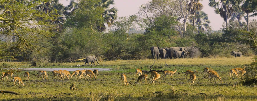 Malawi - Wildlife and landscape of the Liwonde National Park