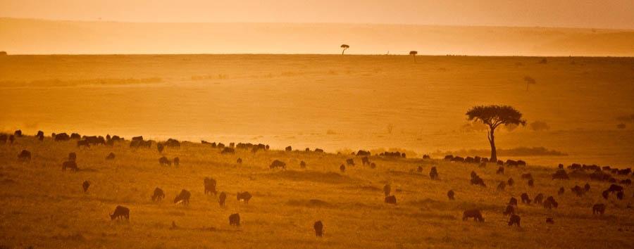 Sala's Camp - Wildlife
