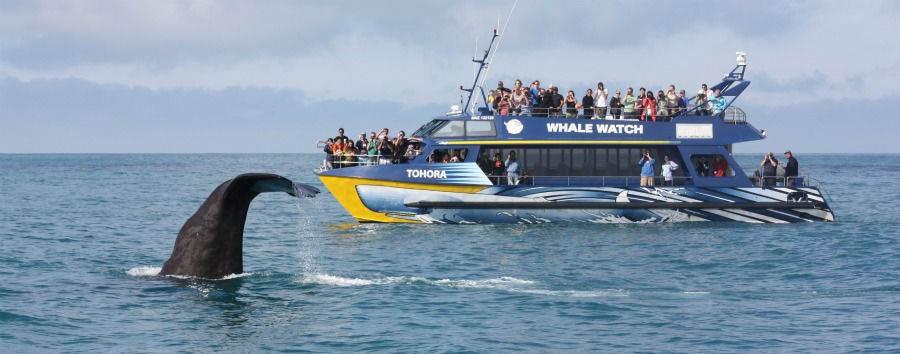 Luna di miele a Kaikoura - New Zealand Hapuku Lodge & Tree Houses, Whale Watching