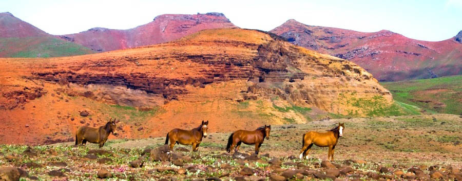 Crociera inusuale nelle Isole Marchesi - Marquesas Islands Wild Horses in Ua Huka Island
