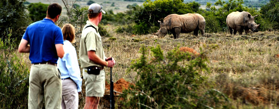 South Africa: The Classic Route 62 - South Africa  Kwandwe Private Game Reserve - Rhino tracking