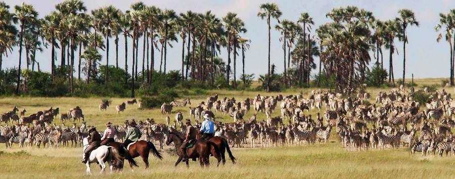 Camp Kalahari - Horse riding during migration