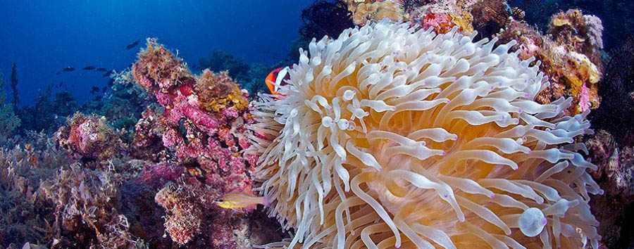 Blue Diving - Philippines Siquijor, Coral Reef