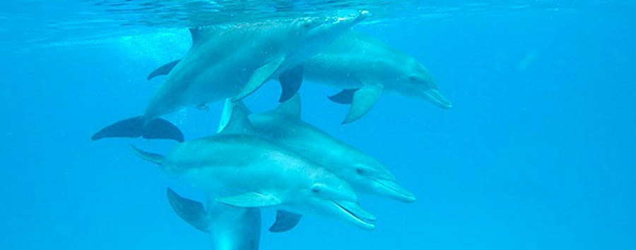 Mozambique - Ibo Island, Dolphins Underwater