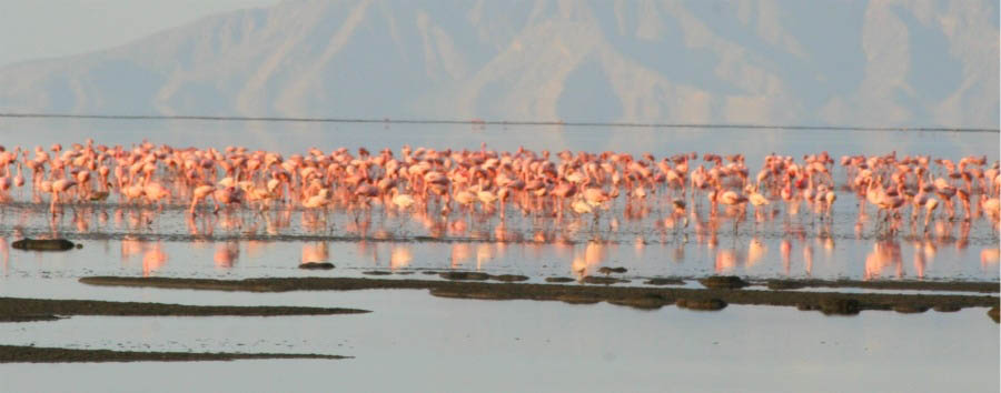 Mosaico Tanzania - Tanzania Flamingos in Ngorongoro Conservation Area