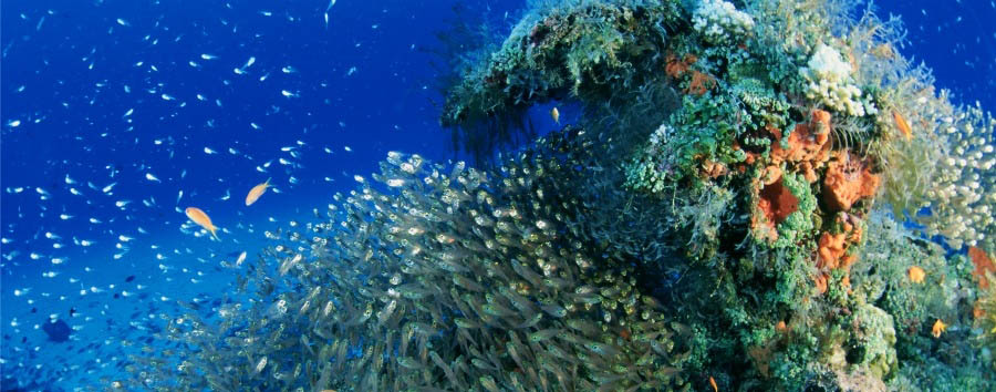 Le bianche spiagge di Okinawa - Japan Okinawa, Amazing Underwater Coral Reef