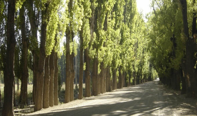Road towards Barreal - Argentina