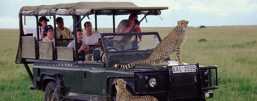 Kenya a 360° - Kenya Close encounters with cheetahs