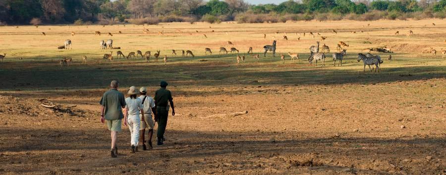Sanctuary Zebra Plains Camp - Walking Safari