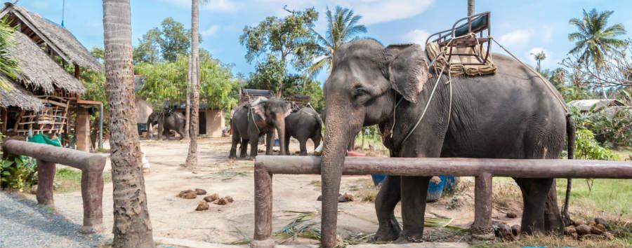 Koh Samui à la carte - Koh Samui Elephant trekking © Dmitry Petrenko/Shutterstock
