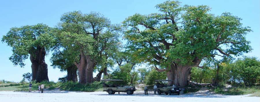 Viaggio nella terra dei San  - Botswana Baines Baobabs in Nxai Pan National Park