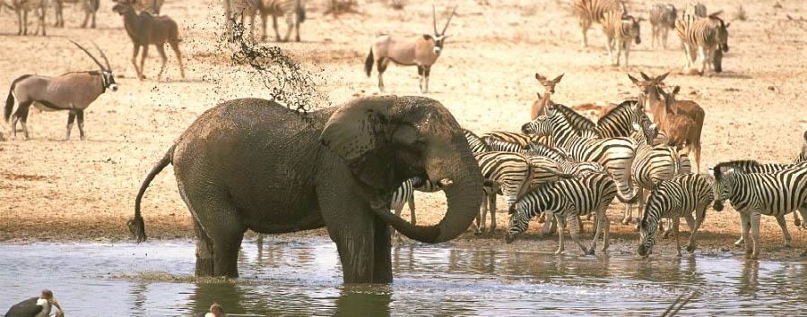 Orizzonti namibiani - Namibia Elephant at a waterhole