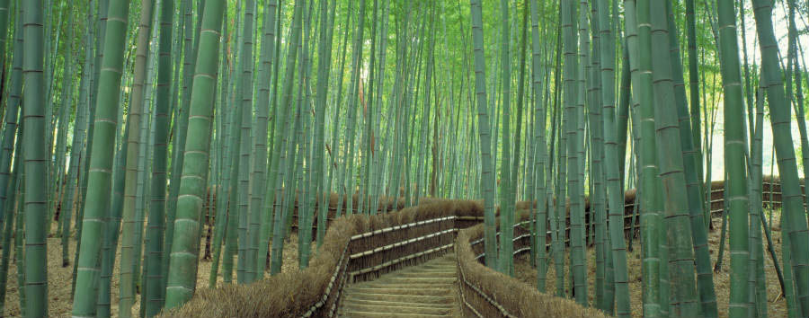 Made in Japan - Japan Sagano Bamboo Forest