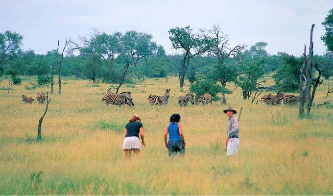 Bush Walk in Timbavati Private Game Reserve - South Africa