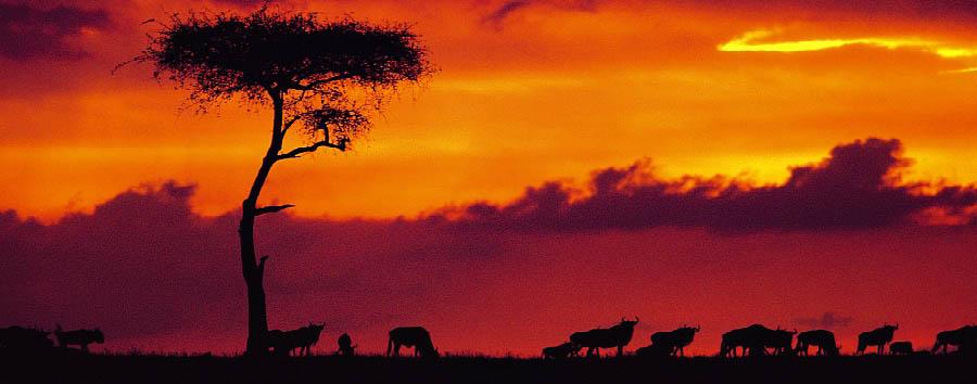 Kenya a 360° - Kenya Amazing sunset