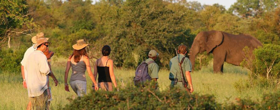 Rhino Walking Safaris - Walking safari