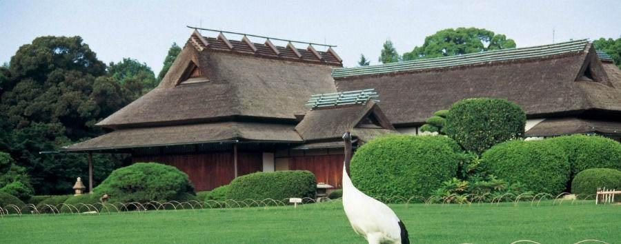 Il Giappone Insolito - Japan Okayama, A Curious Visitor at Korakuen Gardens