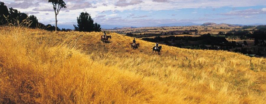New Zealand, Enchanting Nature - New Zealand Huka Lodge, Horse Riding