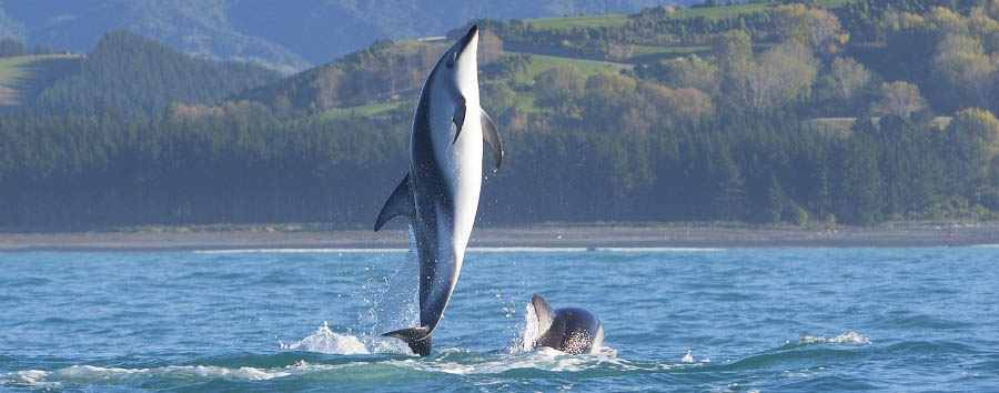 New Zealand Gourmet Escape - New Zealand Hapuku Lodge & Tree Houses, Dolphin Watching