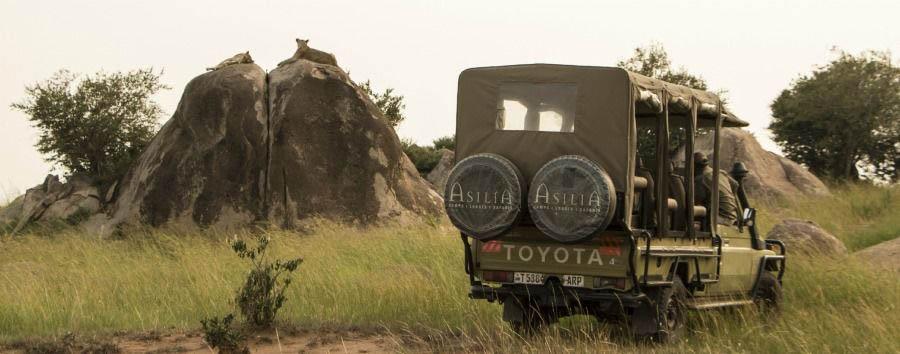 Sayari Camp - Game Drive in The Serengeti National Park