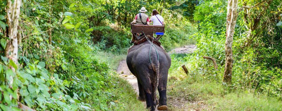 Thailandia Classica - Thailand Tourists ride on elephant in Chiang Mai Forest © aphotostory/Shutterstock