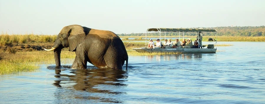 Botswana, smeraldo d'acqua - Botswana Boat Safari along The Chobe River