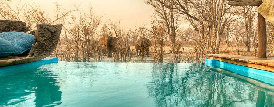 Vintage Botswana - Botswana Hyena Pan Tented Camp, Splash Pool with Elephants
