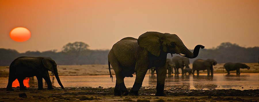 Zimbabwe - Elephants at the Waterhole © Imvelo Safari Lodges