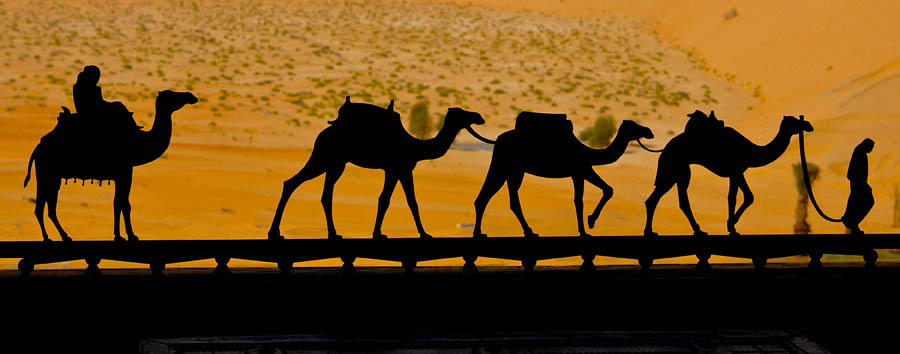 Abu Dhabi - Activities in Qasr al Sarab - Camel Trekking