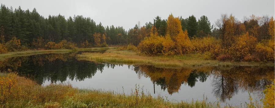 Finlandia: alla scoperta della Lapponia - Finland Saariselka Nature