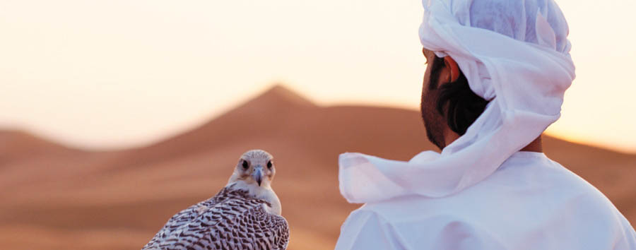 Abu Dhabi - Activities in Qasr Al Sarab - Falconry