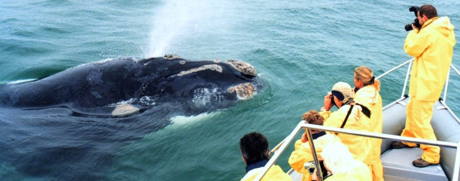 Grootbos+Villa+-+Whale+watching+on+the+%22Whale+Whisperer%22
