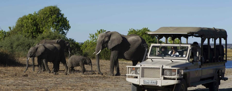 Chobe+Game+Lodge+-+Game+Drive+in+Chobe+National+Park