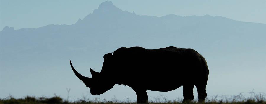 Solio Lodge - Rhino