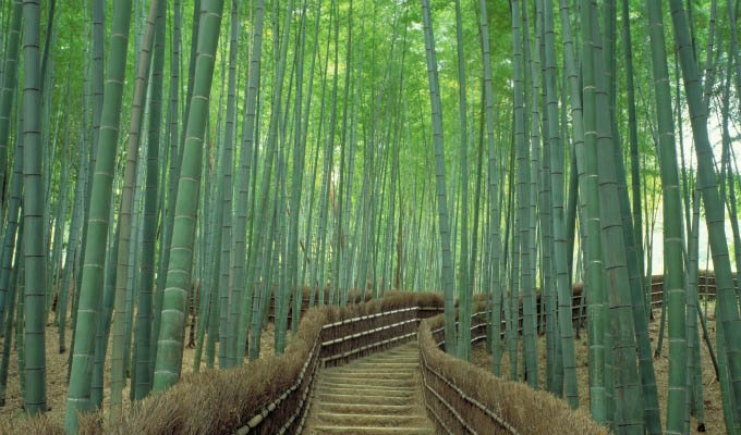 Kyoto, Sagano Bamboo Forest - Japan