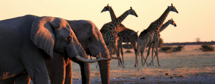 Botswana Wild Parks - Botswana Elephants and giraffes in Chobe National Park