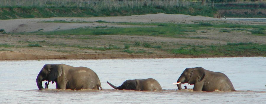 Unique South Luangwa Experience - Zambia South Luangwa National Park, Elephant River Crossing