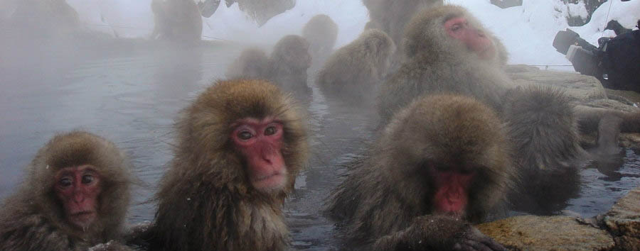 Le scimmie delle nevi - Japan Snow Monkeys at The Jigukodani Snow Monkey Park