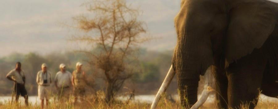 Intimate Zimbabwe - Zimbabwe Elephant Encounter in The Mana Pools National Park