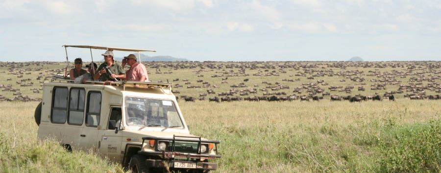Tanzania - Safari with the Wildebeest