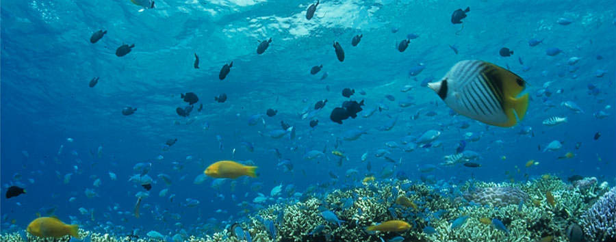 Okinawa Island Hopping - Japan Okinawa Underwater ©Okinawa Convention & Visitors Bureau