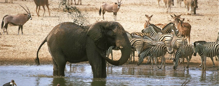 Classic Namibia - Namibia Etosha National Park, Animals at a Waterhole